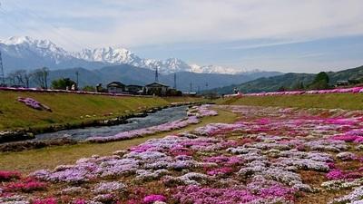 農具川芝桜