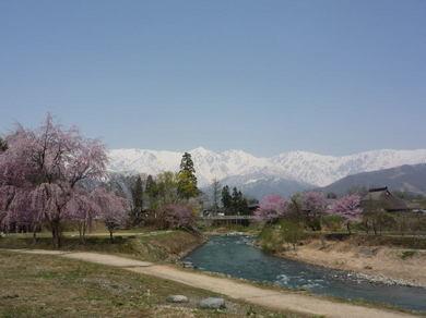 桜咲く大出.jpg