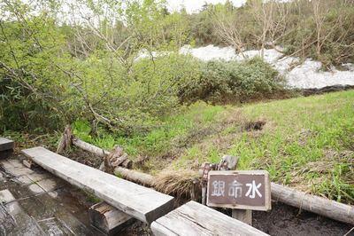 栂池自然園の今