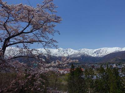 ホテルの桜と景色