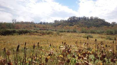 紅葉の栂池高原