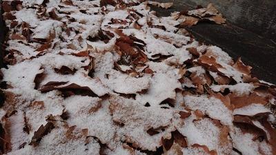 白馬は冬模様