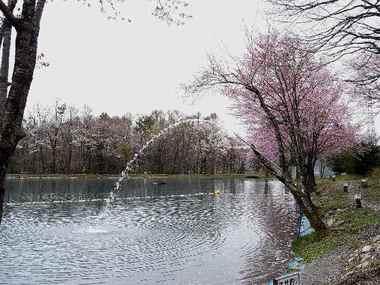 二レ池の桜.JPG