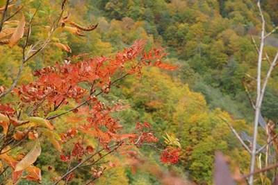 猿倉の紅葉
