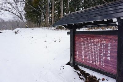 【花情報】落倉自然園