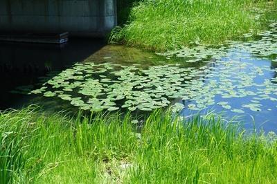 仁科三湖の花