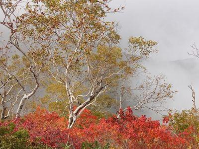 紅葉の小遠見山