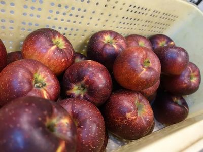 信州リンゴ秋映