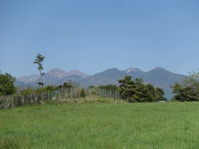 山野草の日